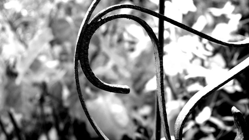Garden decoration Breizh Iron - Metal Natural Structures Blackandwhite Pattern Atmospheric Mood Still Life Backgrounds Pattern, Texture, Shape And Form Material Mix Shadows & Lights EyeEm Best Shots EyeEm Nature Lover EyeEm Best Shots - Black + White EyeEm Best Edits Rusty Decoration Garden Decor Close-up Plant Symbolism Full Frame Textured  Corrugated Iron Corrugated National Icon