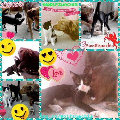 Happyvalentinesday HappyValentine'sDay  Wolfzuachis Valentine's Day  Collage @wolfzuachis Valentineday Loveislimitless HappyValentine Bemyvalentine Colaj