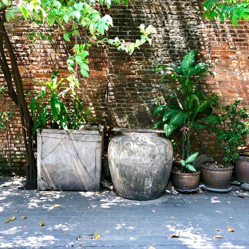 Plant Potted Plant Leaf Wall Wall - Building Feature Brick Wall Flower Pot Water Jar
