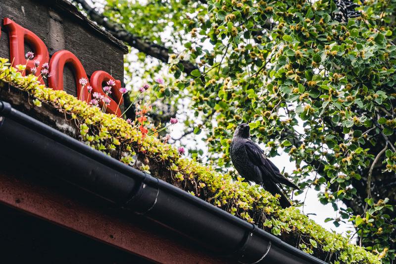 View of bird perching on flower pot