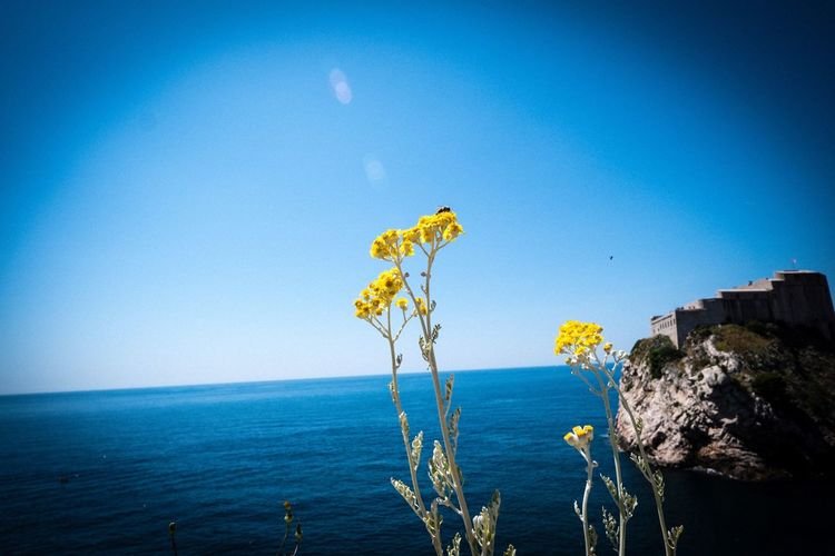 Dubrovnik Plant Dubrovnik Dubrovnik, Croatia Water Sea Beauty In Nature Sky Scenics - Nature Blue Tranquil Scene Nature Outdoors