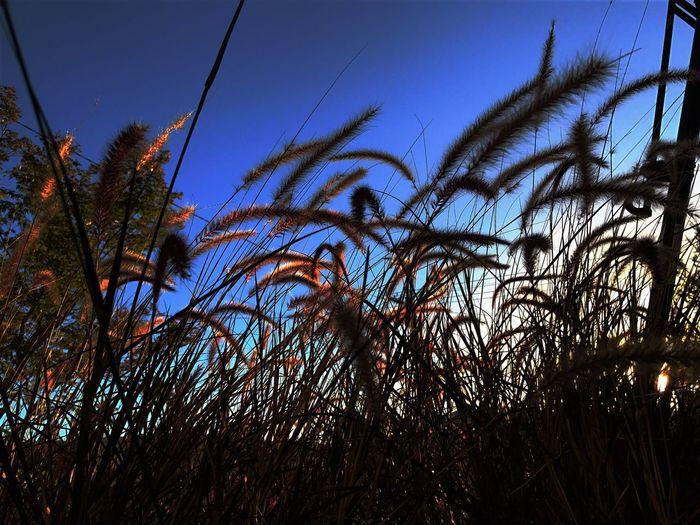 You decide Long Grass Sky Low Angle View