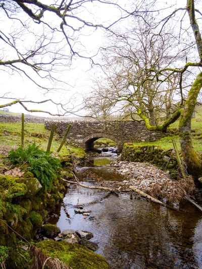 Yorkshire North Yorkshire Landscape Stone Wall Stone Bridge Bridge River Riverside Trees Moss Scenic Peaceful Stream Ripples Rocks And Pebbles