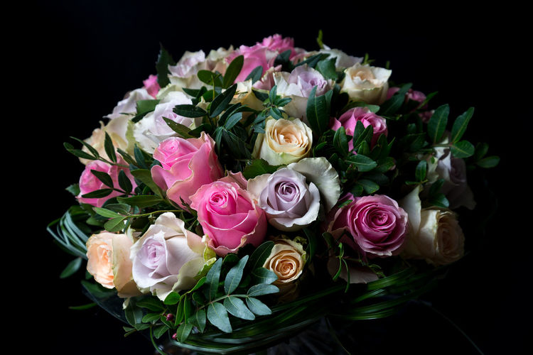 Flower Flowering Plant Plant Vulnerability  Beauty In Nature Fragility Rosé Studio Shot Rose - Flower Flower Head Petal Pink Color Inflorescence Close-up Freshness Bouquet Black Background Flower Arrangement Indoors  Nature No People Bunch Of Flowers Softness