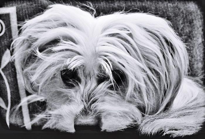 Pippin Chinesecrestedpowderpuff My Pet Dog❤ I Love My Dog Furbaby EyeEm Best Shots EyeEmBestPics My Unique Style Taking Photos Pentax K-50
