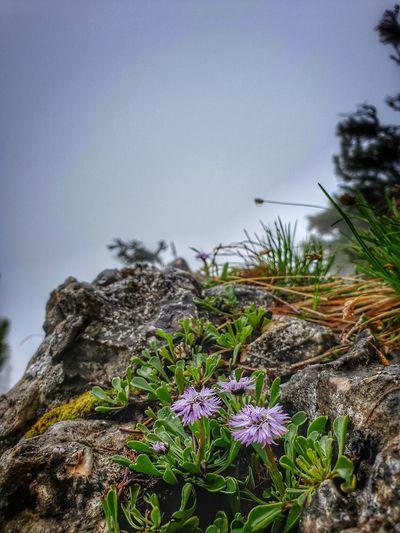 Close-up of purple flowering plants on rock