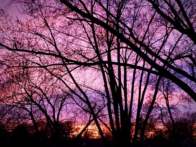 Spring sunsets are here! Springtime Sunset_collection Tree Sunset Branch Silhouette Backgrounds Pink Color Sky Purple Color Romantic Sky Dramatic Sky