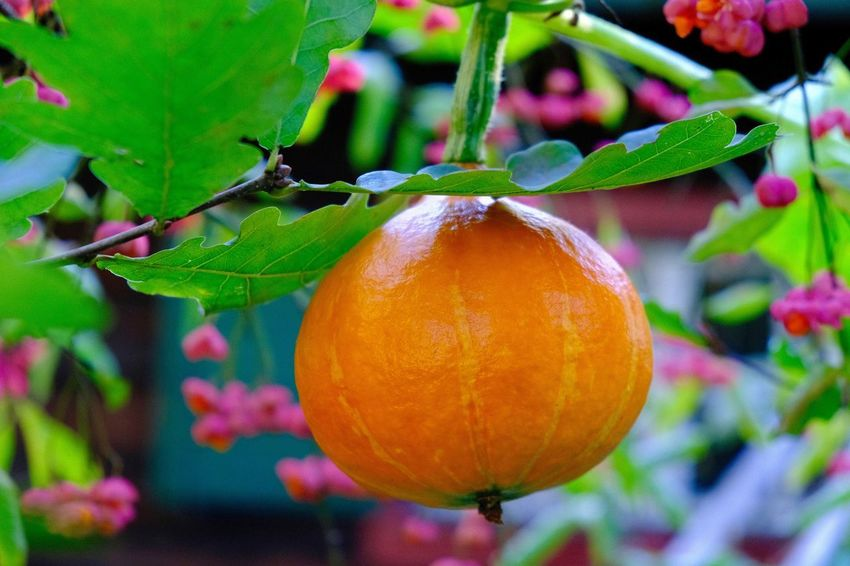 Close-up Food Freshness Fruit Growth Healthy Eating Leaf Nature Orange Color Plant Plant Part Wellbeing