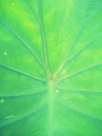 Green Green Color Lovephotography  Enjoying Life Nature Nature_collection Nature Photography Backgrounds Multicolors  Abstract EyeEm EyeEm Nature Lover EyeEm Selects Frond Flower Multi Colored Backgrounds Leaf Full Frame Tree Saturated Color Springtime Beauty Leaf Vein Palm Leaf Leaves Coconut Palm Tree Tropical Tree Abstract Backgrounds Plant Part