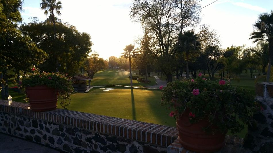 Sunset Relaxing Golf ⛳ Two Is Better Than One Pair Trees Shadows