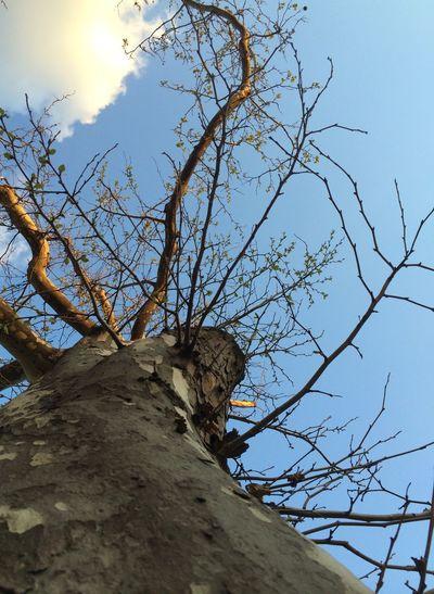 IPSNoFilter Tree Brooklyn