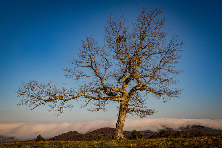Bare tree against clear sky