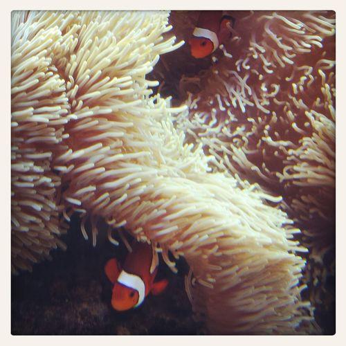 it's Nemo! I found him.