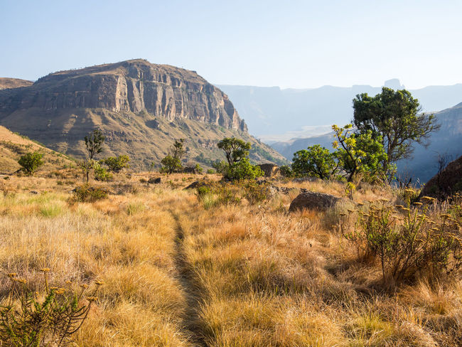 Drakensberg, South Africa Drakensburg Mountains, South Africa, Mountain Hiking Arid Climate Beauty In Nature Clear Sky Day Drakensberg Grass Landscape Mountain Mountain Range Nature No People Outdoors Scenics Sky Tranquil Scene Tranquility Tree