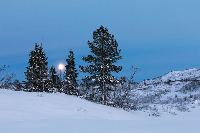 Blue Hour Dark Moon Trees Winter Beauty In Nature Blue Cold Temperature Landscape Moon Moonlight Mountain Nature Night Night, No People Outdoors Scenics Sky Snow Tranquil Scene Tranquility Tree Winter Winter, Spurce