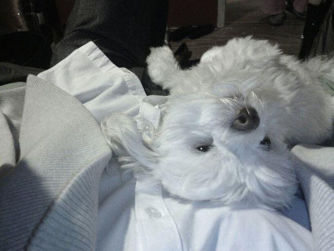 Ada Kat Chilling My Dog