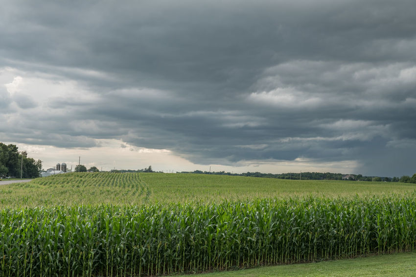Weather Agriculture Cloud - Sky Farm Field Green Color Landscape Outdoors Rural Scene Sky