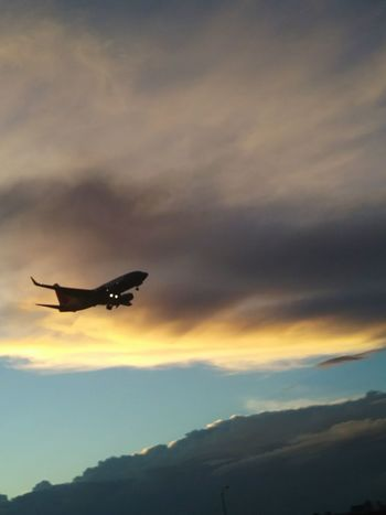Airplane in the sky Sky Harbor Airport Sky Cloud - Sky Airplane Sunset Outdoors