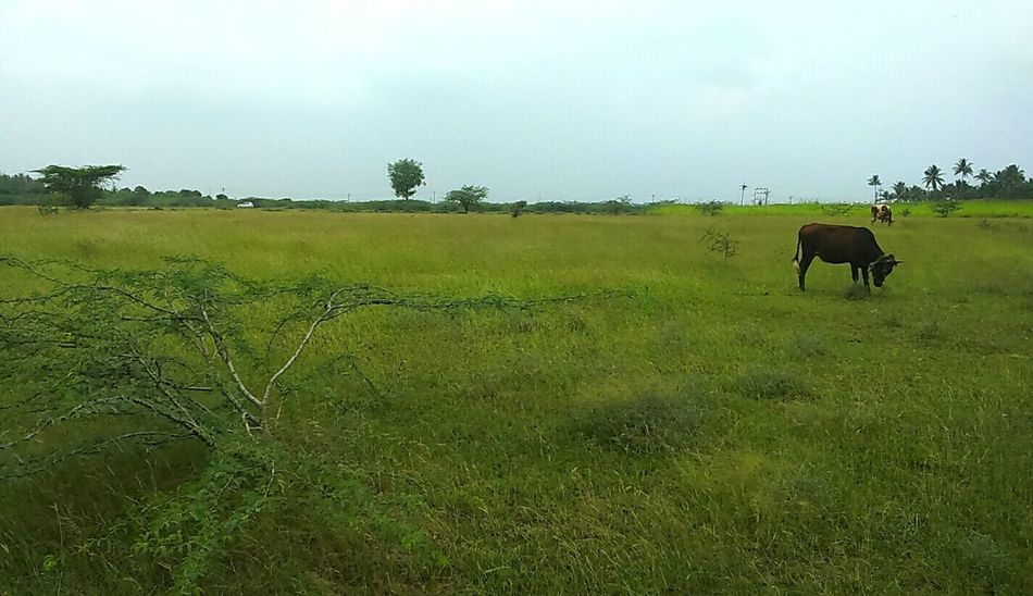 Indian grassland Grassland Landscape Landscape_photography Travel Photography Green Grass Nature