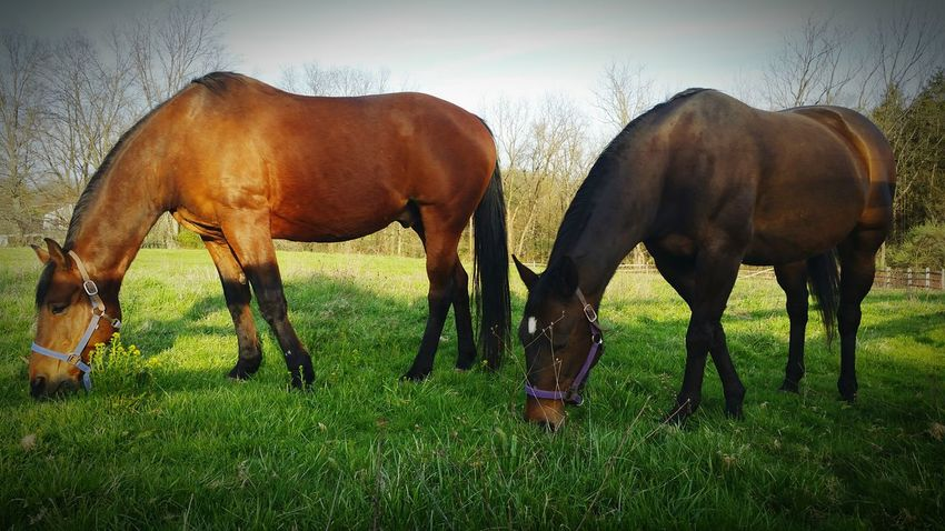 Horse Horse Photography  Horse <3 Horse Life Horselove Horselovers Horselife