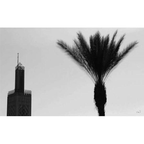 Sirène Noise Adhan Minaret Palm Palmtree Noiretblanc Blackandwhite Vibration God Allah Tanger  Maroc Morocco Travel Trip Voyage Roadtrip