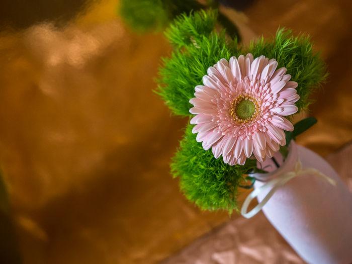 Close-Up Of Flower In Vase