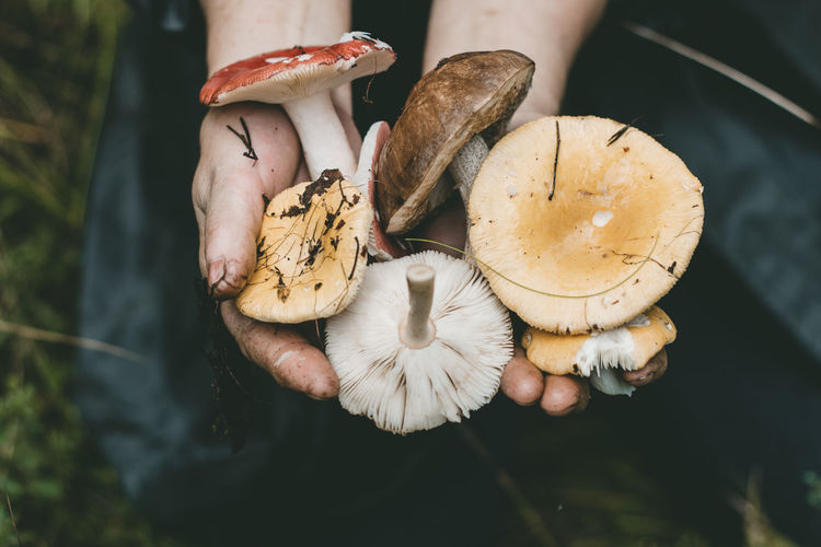 Close-Up Of Hand Holding Mushrooms On Field