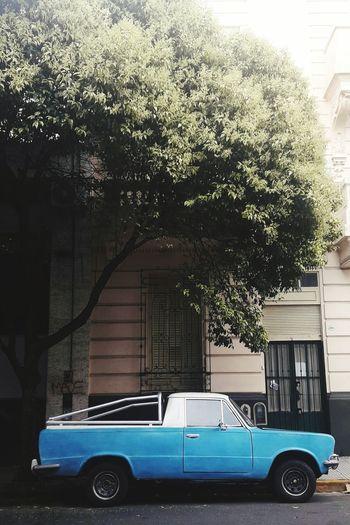 Blue Buenos Aires Buenos Aires, Argentina  Classic Car Blue Car Retro Car Old Car Blue Latin Car Tree Blue Wave Argentina Argentina Photography Antique Oldie Car Oldie  Vintage Vintage Cars Vintage Photo Tree Car Land Vehicle Vintage Car Collector's Car Parking Lot Vintage Retro
