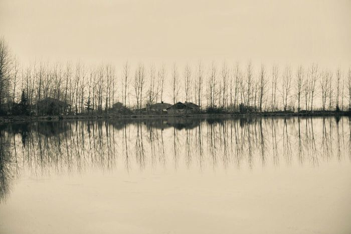 Adapted To The City EyeEmNewHere Lake Trees EyeEm Nuture EyeEmNewHere Rasht Iran♥ Iran Miles Away