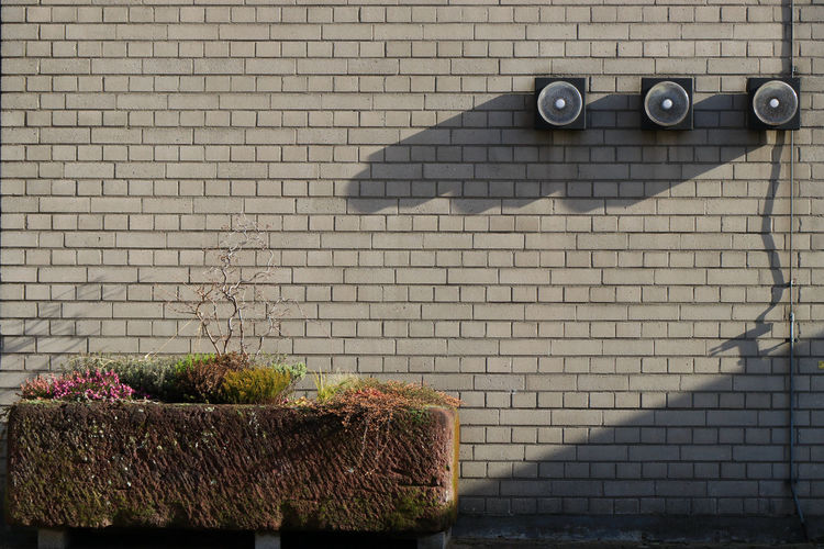 Shadow of potted plant on wall