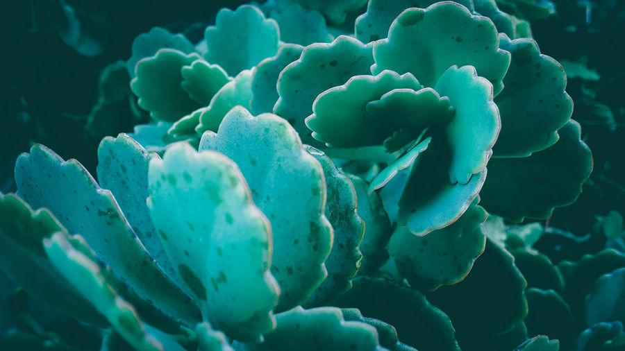 Full frame shot of blue leaf