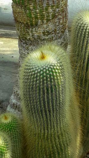 Cactus UnderSea