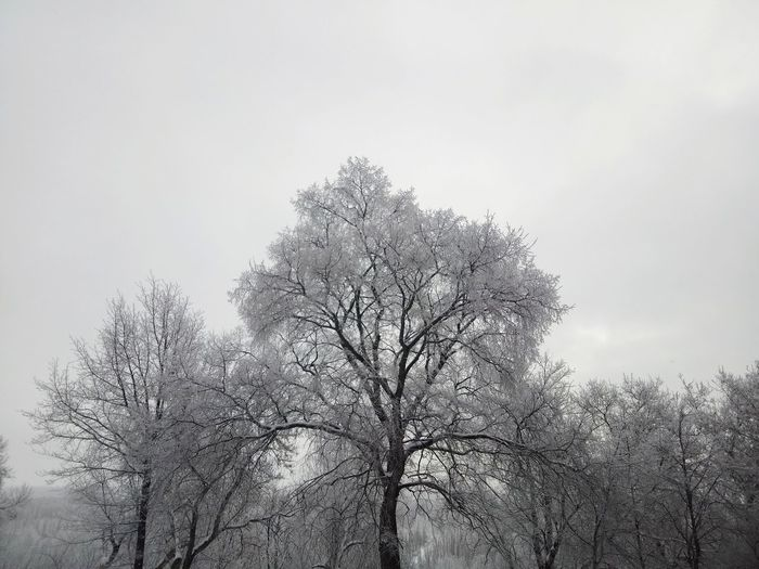 #NoFilter Tree Winter Black Black-white #White #blackandwhite Growth Branch No People Low Angle View Beauty In Nature Sky Day Freshness