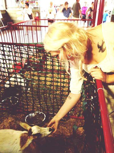 I have a strange animal obsession. Countyfair