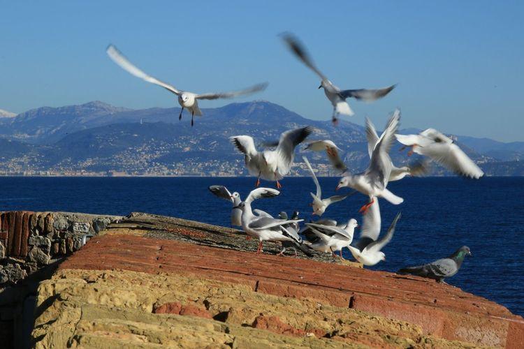 Bird Sea No