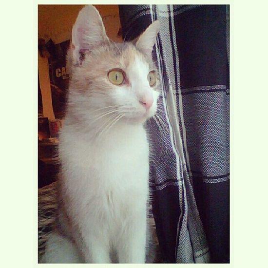 This cat is my life. Katniss Cat Cats Kitty catsofig catsofinstagram guyswithcats beautiful