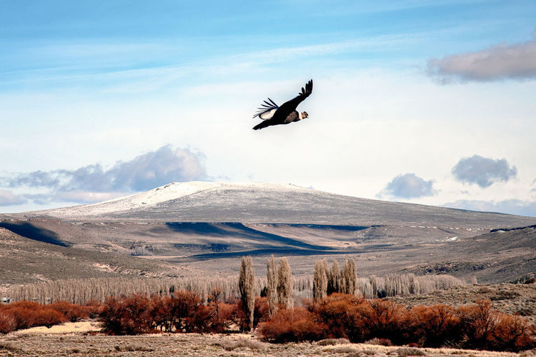 View of bird flying over mountain against sky