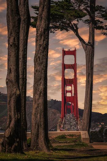 Golden gate bridge seen through trees