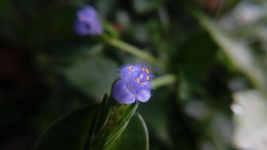 😊😊😊 The Purist (no Edit, No Filter) Simple Quiet Love EyeEm Selects Enchanting India Nature Macro Mobilephotography uniqueness Selective Focus Outdoors Freshness Detail Life Light And Shadow Beauty In Nature No People Check This Out Hello World Flower Head Flower Purple Close-up Plant Flowering Plant In Bloom Lavender Colored Blossom Plant Life Wildflower Pollen