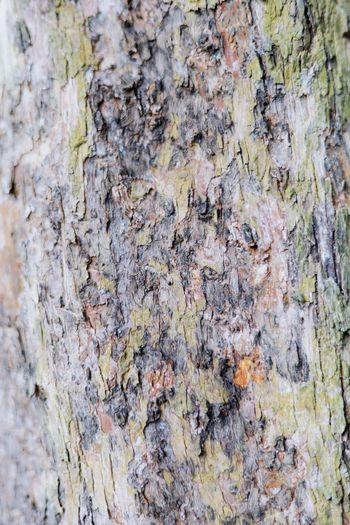 Texture of a tree Full Frame Backgrounds Textured  Rough No People Close-up Trunk Outdoors Wall - Building Feature Built Structure Plant Nature Tree Weathered Pattern Tree Trunk Plant Bark Day Wood - Material Lichen