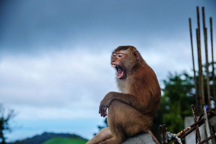 Low angle view of monkey sitting against sky