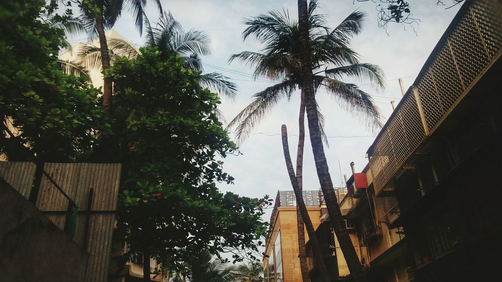 Tree Palm Tree Architecture Low Angle View Built Structure Outdoors Sky Day Building Exterior No People Nature Branch Full Frame Nature Photography Nature_perfection Backgrounds Beauty In Nature