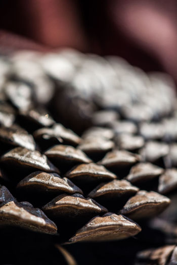 Backgrounds Close-up Large Group Of Objects No People Abundance Pattern Textured  Still Life Cone Macro Plant Seed
