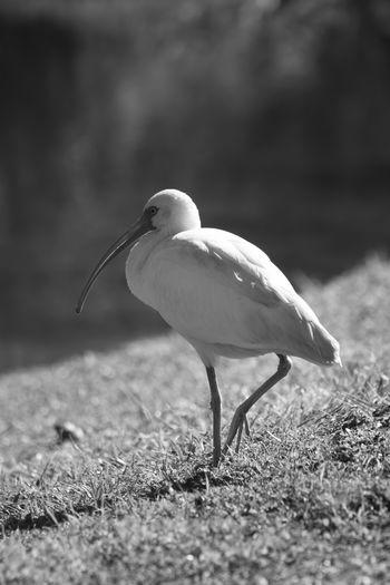 White bird by