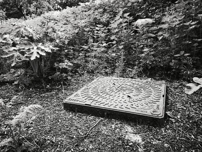 Manhole in the woods Woods Covering Cover Weeds EyeEm Nature Lover EyeEm Gallery Urban Urban Landscape Urban Photography Mono Monochrome Black And White Undergrowth Trees Hidden Huawei P20 Pro Huawei P20 Pro Photography High Angle View Close-up Manhole  Sewer Drain Lid Water Pipe