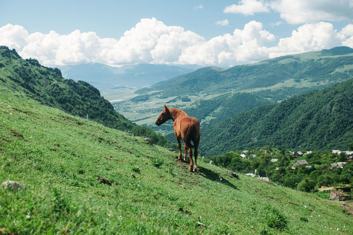 Animal Animals Armenia Beauty In Nature Cloud Cloud - Sky Day Grass Grassy Green Color Horse Landscape Nature Non-urban Scene Outdoors Rural Scene Sky Tranquility