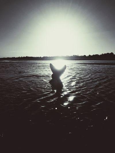 Mermaid Sea Beach Silhouette