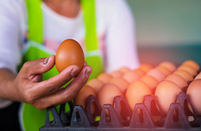 Business Chef Egg Focus On Foreground Food Food And Drink Freshness Hand Healthy Eating Holding Human Body Part Human Hand Indoors  Men Midsection Occupation One Person Real People Wellbeing Working