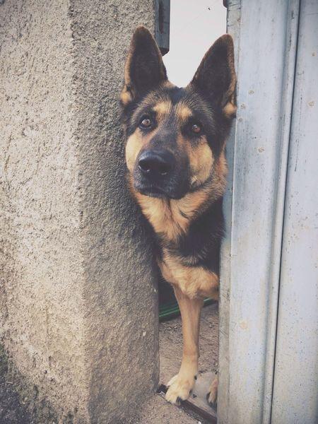 Dog Dogs Animals Animal ASIA ❤️