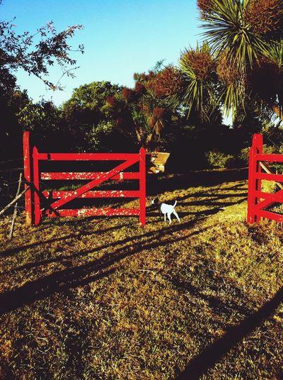 Taking Photos Enjoying Life Country Shadows